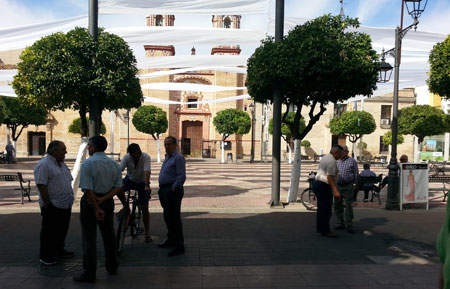 mayores plaza real